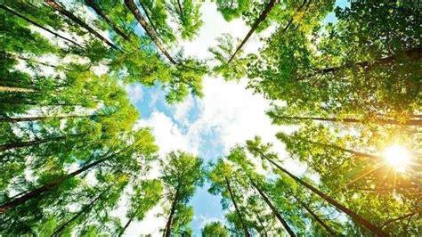 images of trees 26 poderosas li 231 245 es de vida que s 243 a natureza pode nos ensinar