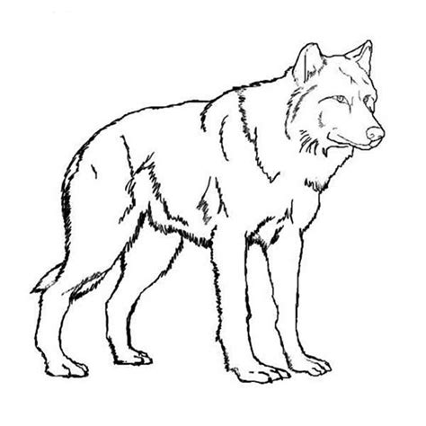 free printable coloring pages wolf realistic wolf coloring pages story ideas