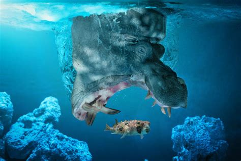 imagenes de la vida salvaje incre 237 ble photoshop de la vida salvaje planeta curioso