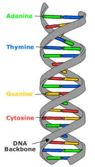 dna the molecular basis of mutations