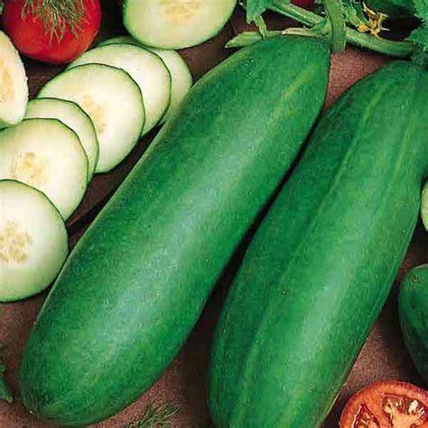 vegetable seeds for sale cucumber seeds for sale 11 varieties vegetable seeds