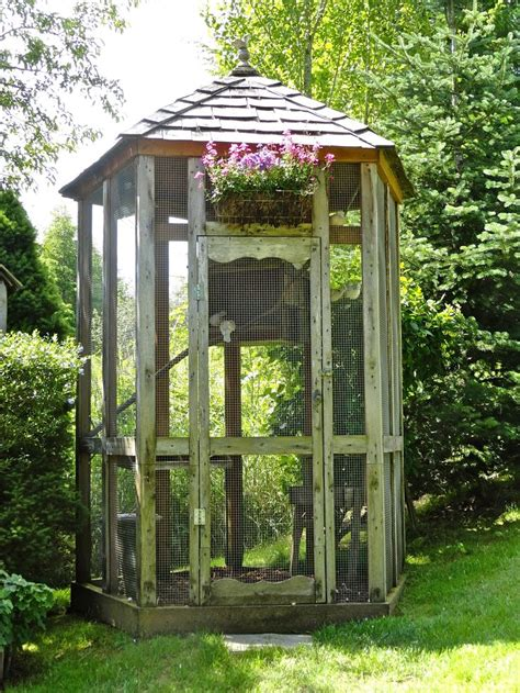 dove aviary aviary 187 187 187 pinterest