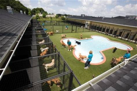 dog house resort and spa pet resort on pinterest dog boarding kennels dog hotel and dog boarding