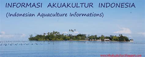 Pakan Udang Surabaya informasi perikanan budidaya indonesia