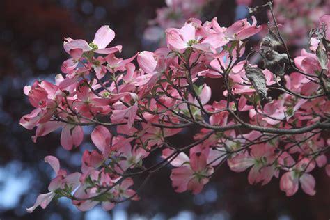 hypoallergenic tree hypoallergenic trees a list of exles