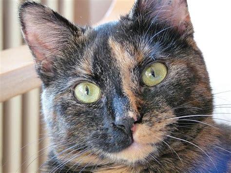 wann sind katzen rollig wann sind schnurrhaare wei 223 schwarz zweifarbig seite