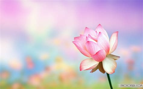 flower wallpaper zip download the most beautiful and colorful flowers wallpapers for