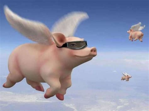 pigs fly slot machine game  play