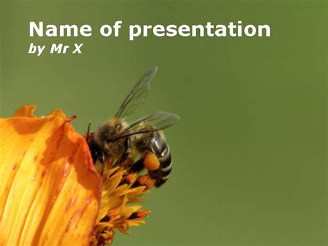 bee powerpoint template bee pollinating a flower powerpoint template