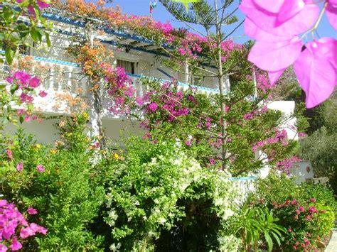 the best garden picture of angelika studios alinda