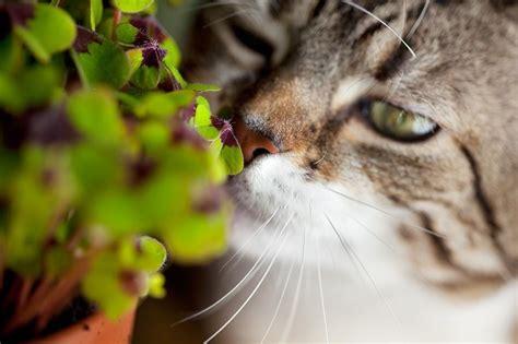 foto fiori coloratissimi gatti a primavera trib 249 animale onlus