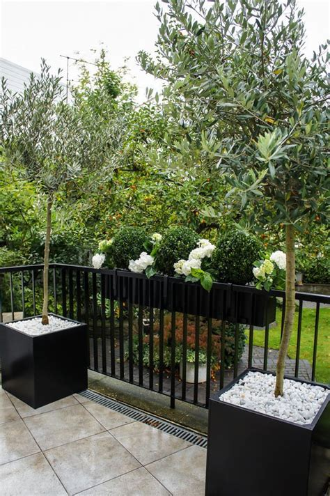 Olive Tree In Planter by Bespoke Planters Metal Planters Custom Window Boxes
