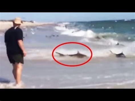 man captures 'rare' shark event all on camera