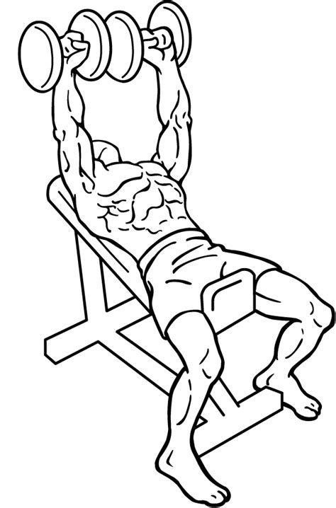 dumbbell incline bench press file dumbbell incline bench press 1 png wikimedia commons