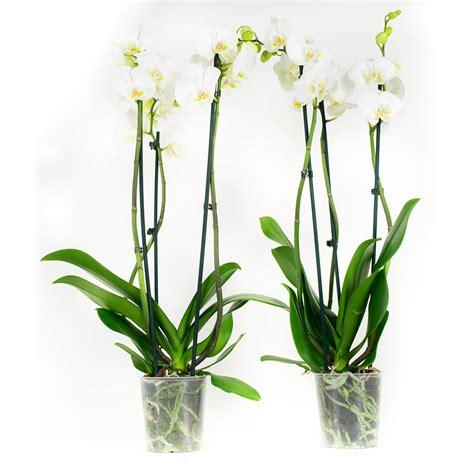 jena bloemen en planten bloemen en planten aan huis babygoodies