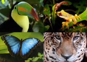 animals and plants that live in the tropical rainforest biodiversity in the tropics tropicalbiology2012