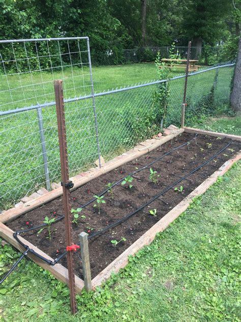 drip irrigation system   square foot garden gardening