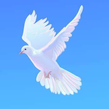 imagenes de luto con palomas pigeon 1 free vector 4vector