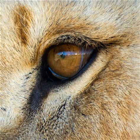me in a lion eye: chiara gm: galleries: digital