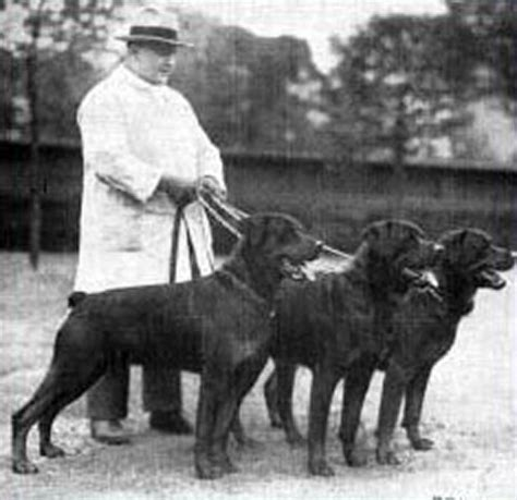 historic photographs of rottweilers dating back 1907