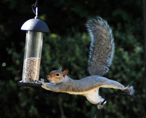 bird feeders are a squirrel s best friend backyard