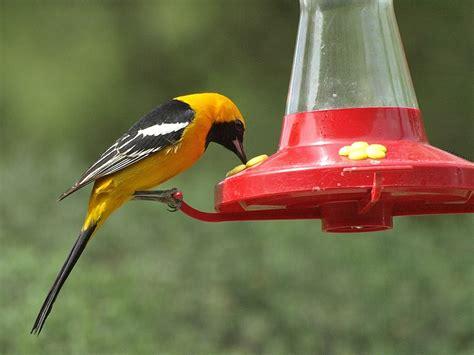 birds mongrel4u s blog