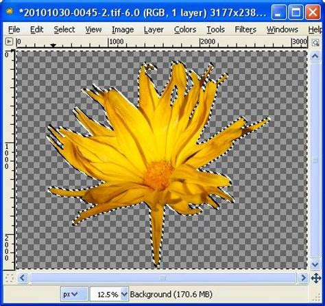 remove picture background powerpoint 2gold info