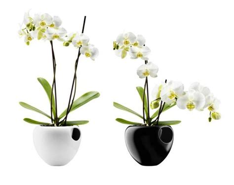 Orchids Pots Planters by 8 Best Indoor Self Watering Planters For The Black Thumbed Design Lover Treehugger