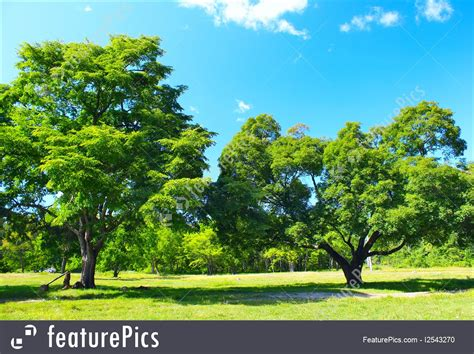 Pictures Of Summer Trees