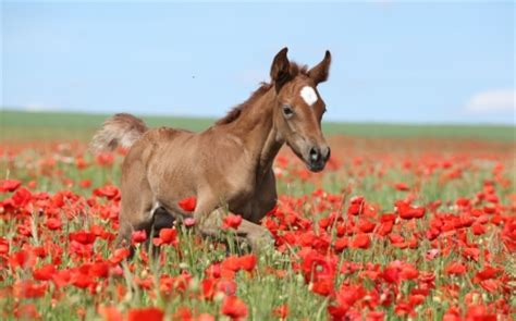 baby horse horses animals background wallpapers