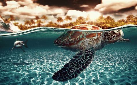 turtles background sea turtles wallpapers wallpaper cave