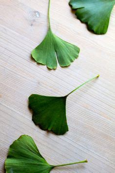 Leaves From Marimekko by 1000 Images About Gincko Biloba On Leaves