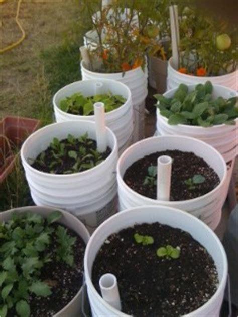 5 gallon container gardening self watering pots on self watering indoor