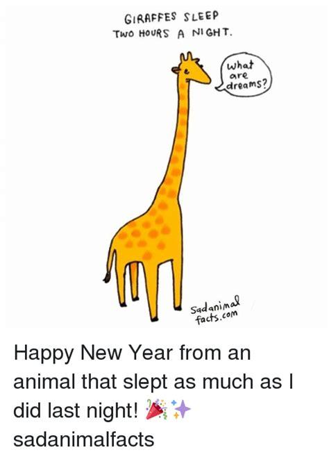 new year animals facts 25 best memes about giraffes sleeping giraffes sleeping