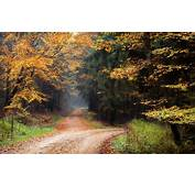 Landscape Nature Dirt Road Forest Fall Leaves Trees