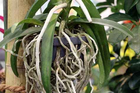 Garten Pflanzen Erkennen by Orchideen Krankheiten Erkennen Und Richtig Behandeln