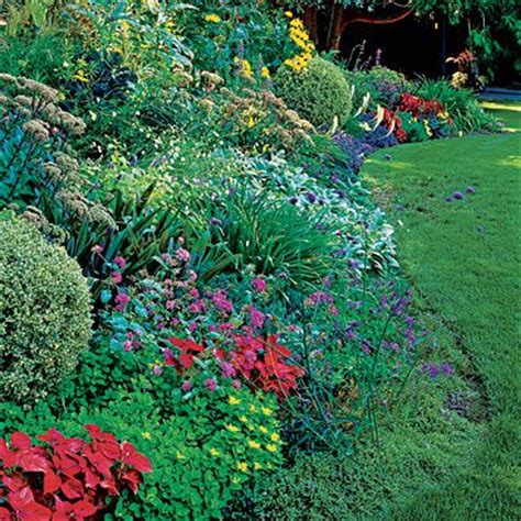 garden borders plants and border garden on pinterest