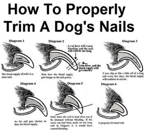 how to trim a dogs nails dogs a and nails on