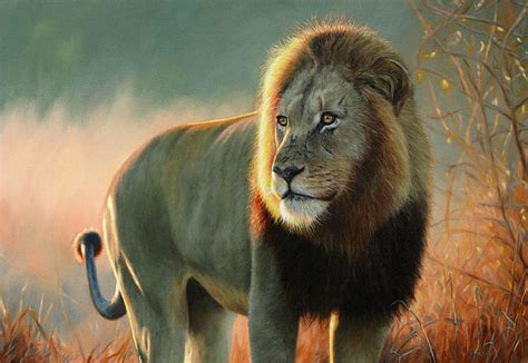 lion print lion fine art print by professional willdife artist