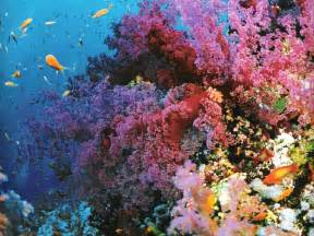 Colourful Climbing Plant - great barrier reef australia corals and fish02 321 world all details