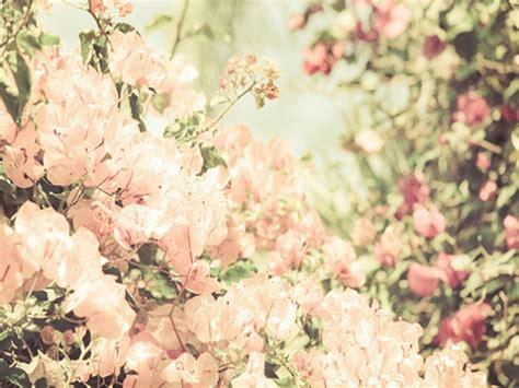 imagenes flores vitage wallpapers flores vintage ๑ ๑ ρσѕт ραяα тι ๑ ๑ taringa