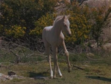 silver stallion mustang ok the silver stallion king of the brumbies aka