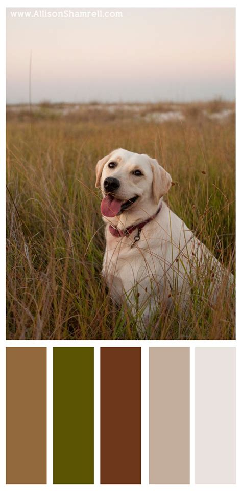 color palette  willow  yellow labrador dog colors