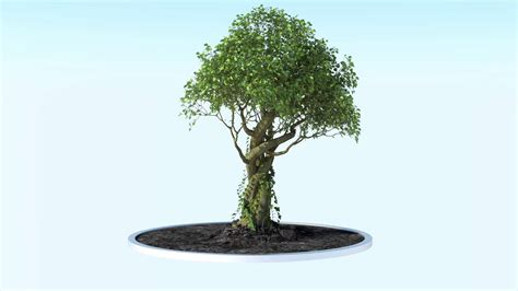 animation tree growing tree animation growfx