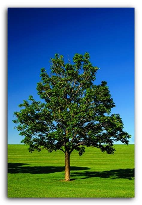a single tree: hear2see: galleries: digital photography