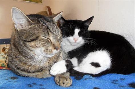 katzen zu hause w 252 rmer bei katzen zu hause behandelt