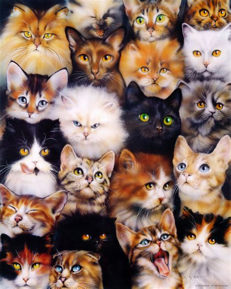 Cat Wallpaper Collage | image gallery kittens collage wallpaper