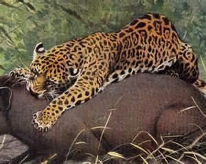 What Do Jaguars Hunt 1910 Gorgeous Jaguar Print Jaguar By