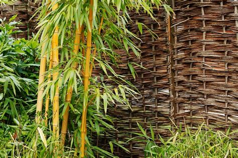 magnesio supremo forum free photo background bamboo botanical free image on