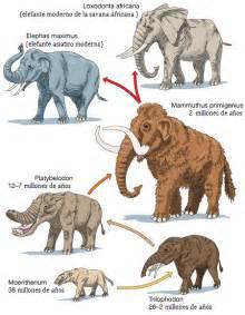 la evoluci 243 n de los elefantes taringa